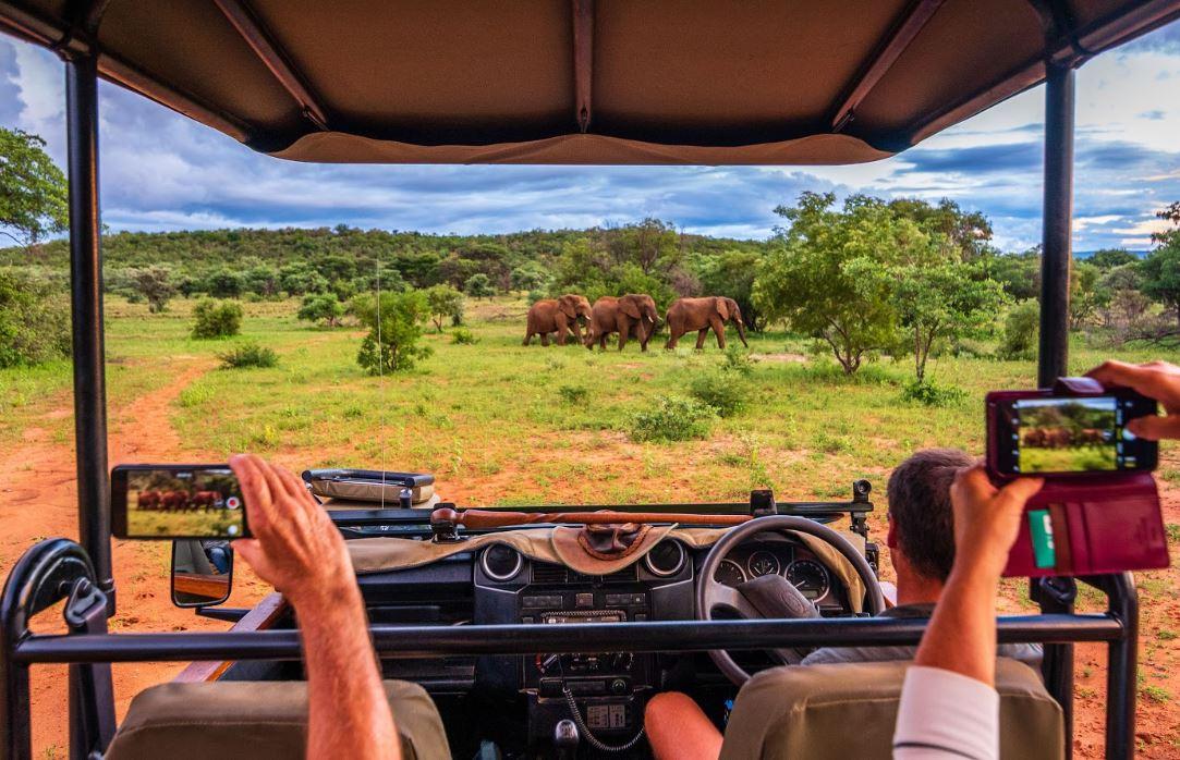 Kaingo Elephants on Drive